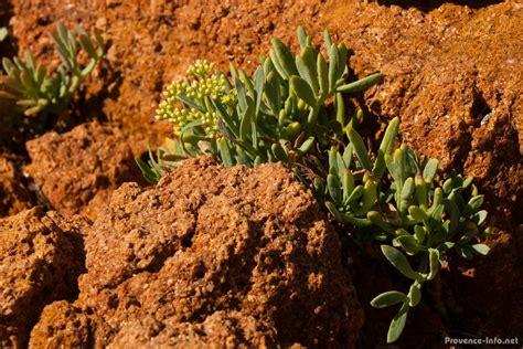 blumen und pflanzen der provence provence info net - Pflanzen Der Provence