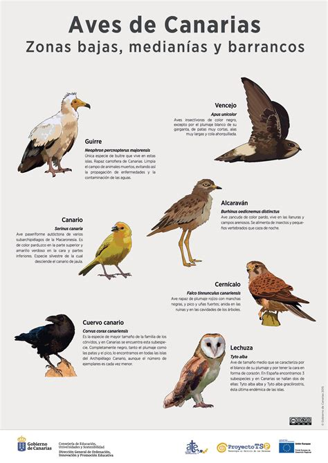 aves de espaa y l 225 mina aves de zona bajas 187 recursos educativos digitales