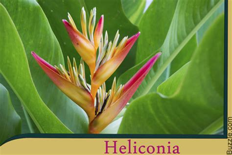names of plants in the tropical rainforest these vibrant rainforest plants will take your