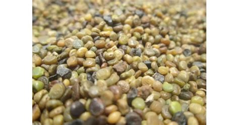 Pupuk Kalsium Semprot jual benih indigofera