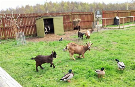 whisby garden centre lincoln whisby animal centre day out with the