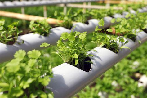 hg hydroponics blog hydroponic gardening  beginners