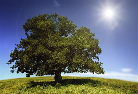 keep trees hydrated during summer heat the money pit