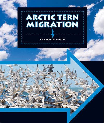 arctic tern migration the child's world