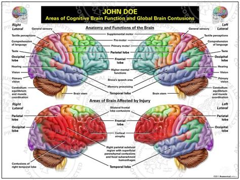 brain sections functions medical art areas of cognitive brain function and