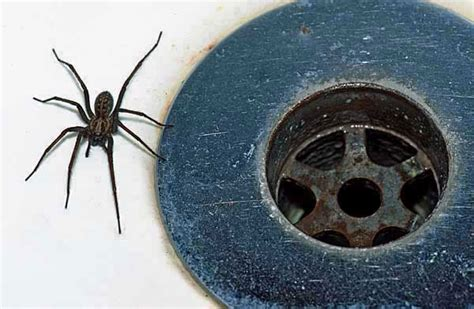 Garden Spider Nest Uk Top Tips To Stop The Autumnal Spider Go