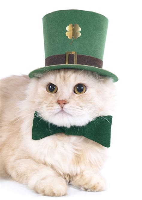 where can i adopt a near me adopt a kitten near me pets world