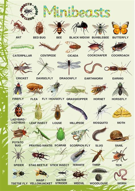 printable insect poster minibeasts poster inquiry minibeasts pinterest