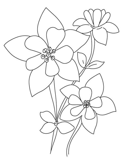 Flowers Coloring Pages Print by Columbine Flowers Coloring Pages And Print
