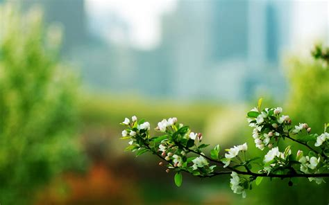 elegant desktop wallpaper hd natural flowers macro photography elegant wallpaper hd
