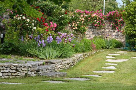 fiori particolari da giardino progettare un giardino rustico pieno di colori e calore