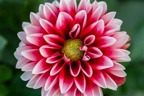 fiori dalia dalia hotelroomsearch net