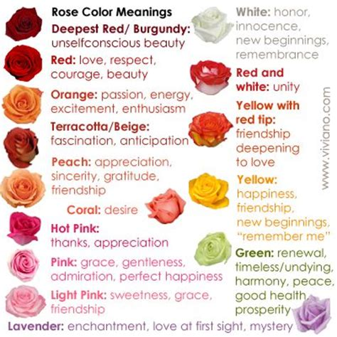 pink color meaning the 25 best rose color meanings ideas on pinterest