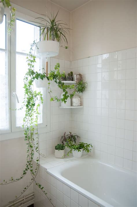 plants for bathroom with no windows shower plants plantas dentro do box vari 233 t 233 s guide d 233 cor