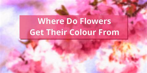 how do flowers get their color where do flowers get their colour from wisefuzz