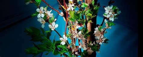 fiori in giapponese l ikebana giappone