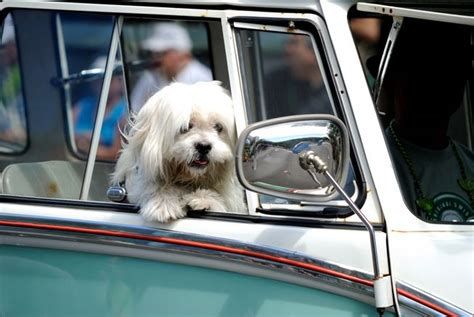 why do dogs like to be pet why do dogs like to ride in cars mnn nature network