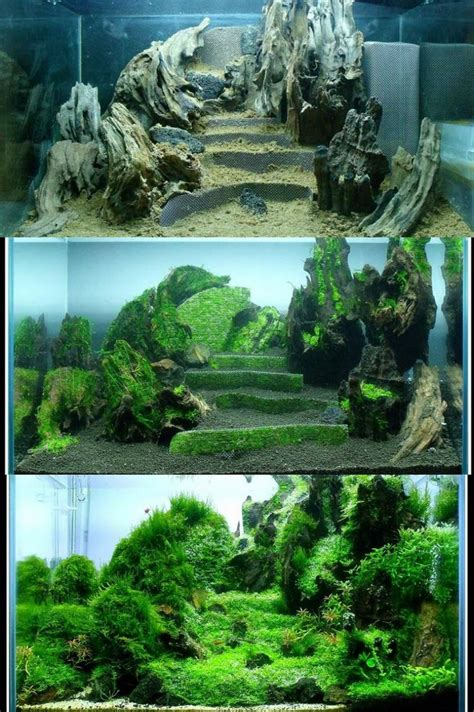 shrimp tank aquascape progression of terraces in a nano tank aquascaping