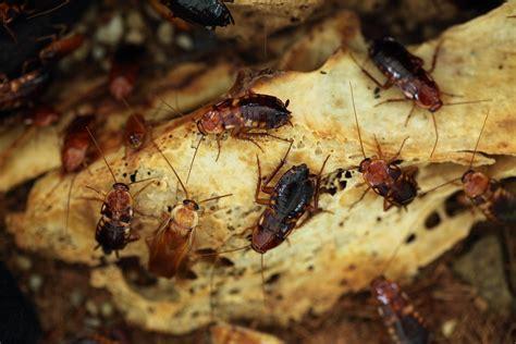 bed bugs philadelphia best bed bug exterminator in philadelphia pa prodigy