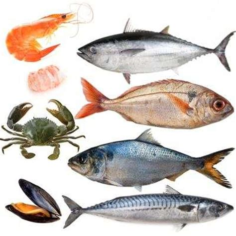 Calendario Temporada Lista De Pescados Y Mariscos Por Temporada Calendario De