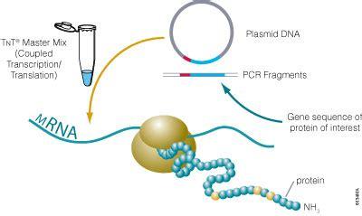 proteinase k promega protein expression