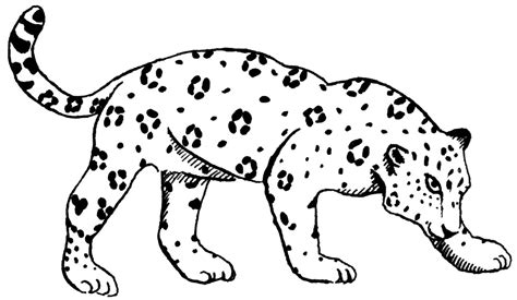 pictures of baby jaguars az coloring pages