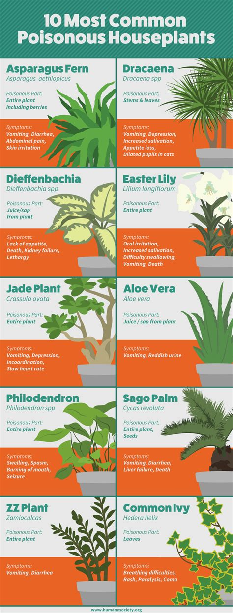 what plants are poisonous to dogs houseplants safe for cats and dogs fix com