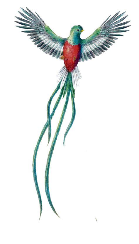 fotos de tatuajes de quetzales el ave m 225 s linda del mundo el quetzal im 225 genes taringa