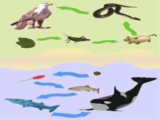 cadena alimenticia acuatica y terrestre wikipedia biodiversidad pr 225 ctica 2 ecosistemas
