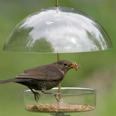 Where To Put Bird Feeder winter bird feeders backyard birds the bird food store