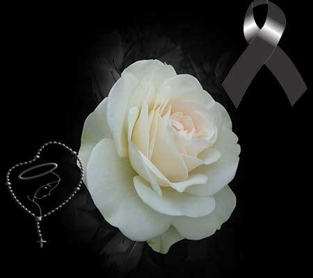 imagenes de rosas luto de juarez rosas blancas de luto imagenes de luto