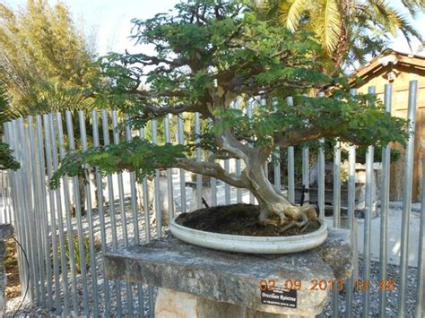 Heathcote Botanical Gardens Bonsai Picture Of Heathcote Botanical Gardens Fort Tripadvisor