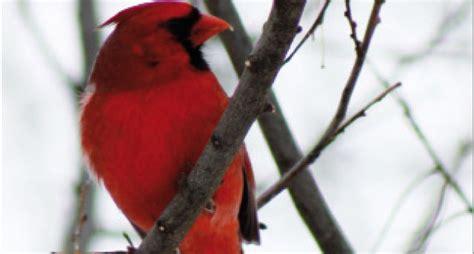 temperatura interna corporea la temperatura corporea degli uccelli