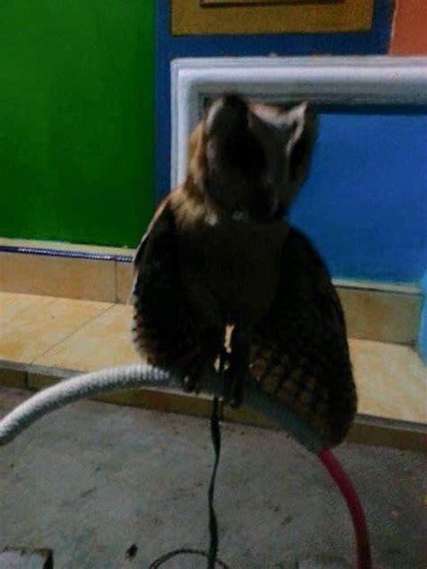 Sarung Tangan Kulit Untuk Burung Hantu cara melatih burung hantu untuk pemula binatang peliharaan