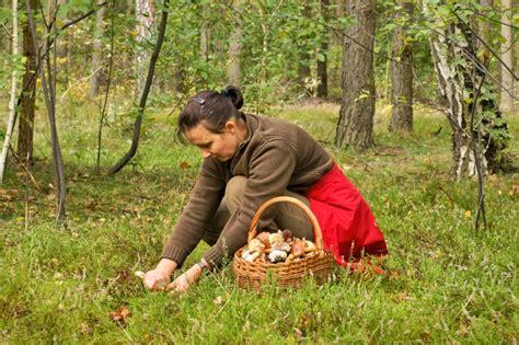 wann pilze sammeln pilze zeit 187 wann ist saison