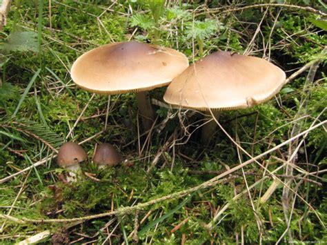 Einheimische Pilze Im Garten by Pilze April Pilzfinder Solling De Pilze Pilzbestimmung