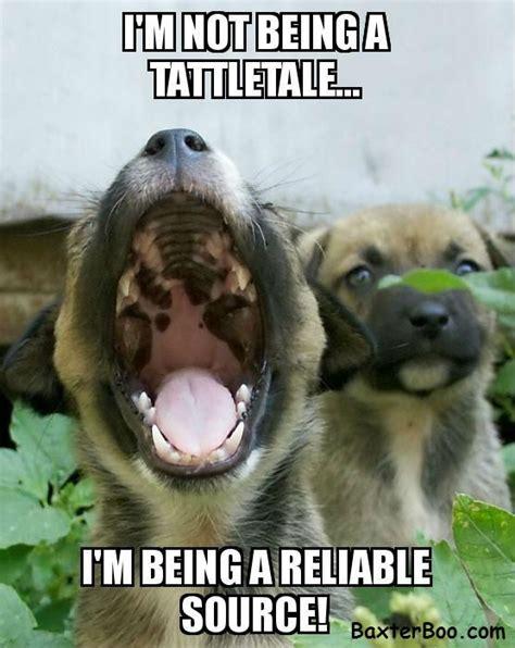 Tattle Tale Meme - i m not a tattletale cute pet memes and quotes