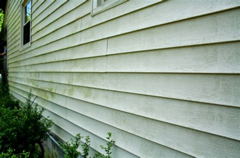 mold on side of house mold busters or how to clean vinyl siding