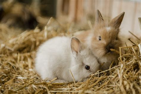 rabbit images pet animals bunny www pixshark images galleries