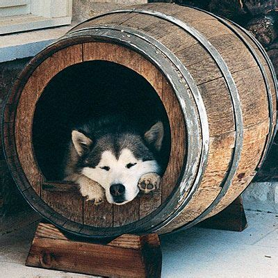 fun dog houses 16 fun functional doghouses house ideas wine barrels and dog houses