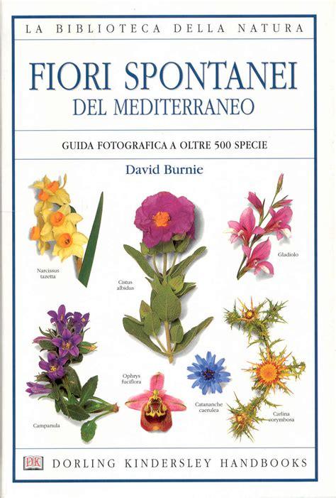 fiori mediterraneo fiori spontanei mediterraneo david burnie 2