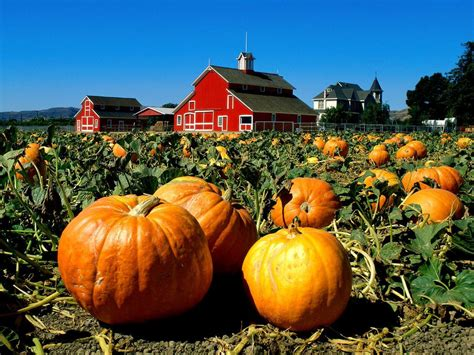 Home Decor Stores Portland Oregon celebrate fall with classic hayrides and a pumpkin patch