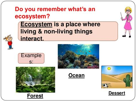exle of ecosystem how do ecosystems compare