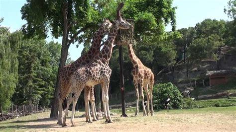 giardini zoologici giardini zoologici e zoo safari in italia