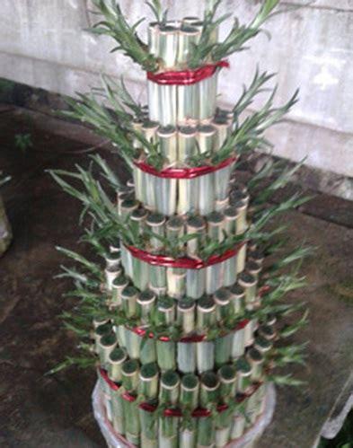 Bambu Rejeki Pagoda 3 Tingkat tanaman bambu hoki pagoda 5 tingkat variegata bibitbunga