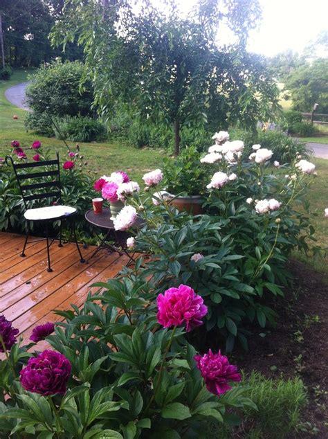 Peony Garden by Peony Garden Bordering Patio Gardens