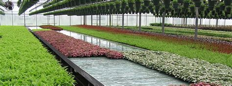best greenhouses commercial greenhouse structures design construction ggs