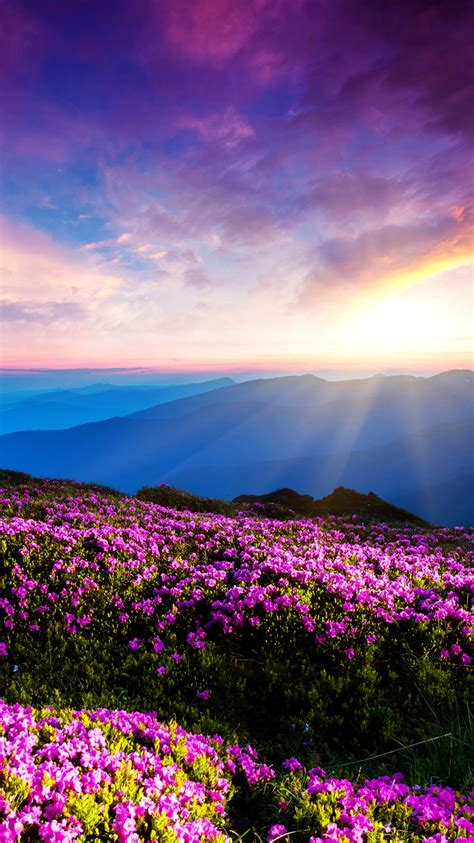 mountain flowers iphone wallpaper iphone wallpapers