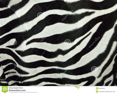 what color is a zebra s skin zebra skin background stock photo image 20040440