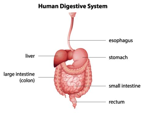 What Order To Detox Organs by Colon Cleanse Tea Help With Weight Loss Updated 2018
